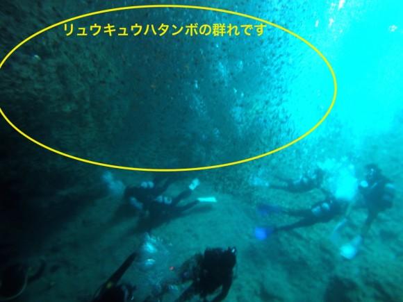 真栄田岬シュノーケリング