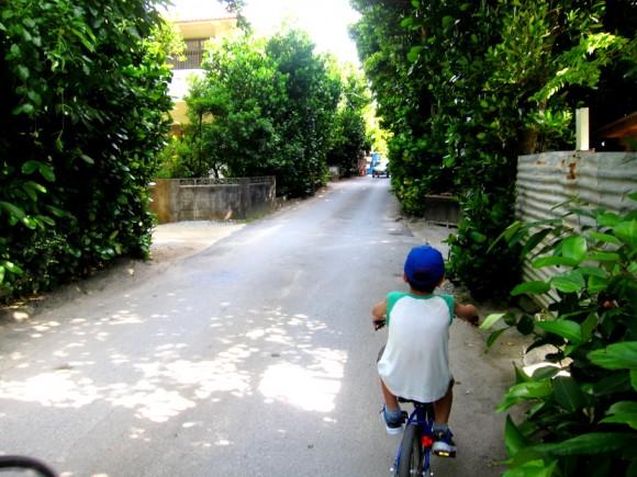 備瀬のふくぎ並木サイクリング