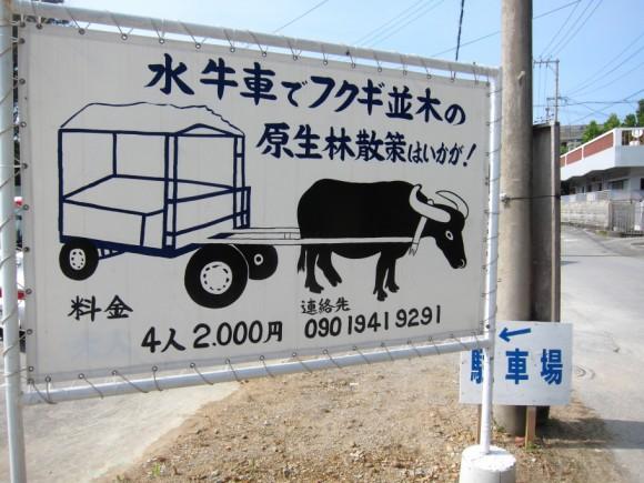 備瀬のフクギ並木水牛車