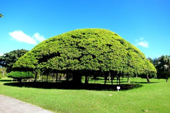 宮古島東急ホテルの木