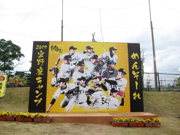 阪神タイガース沖縄キャンプ
